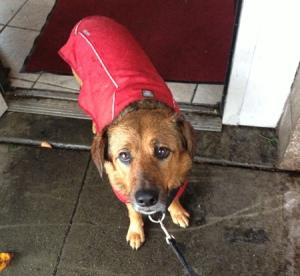 Hates the rain